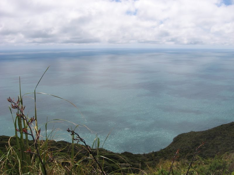View over the ocean from the Mercer Bay track